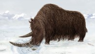 Artist's reconstruction of Tibetan woolly rhino (Julie Naylor)