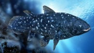Coelacanth (Gerard Lacz/Animals Animals—Earth Scenes)