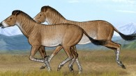 Two adult horses Hipparion zandaense running fast in their open steppe habitat of the Tibetan Plateau (Yu Chen)