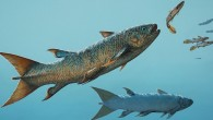 The fast-swimming coelacanth Rebellatrix chasing smaller species of fishes in the Early Triassic ocean west of Pangaea (Michael Skrepnick)