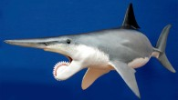 Outdated restoration of Helicoprion (© Staab Studios)