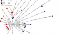 This image shows phylogenetic network of 39 prehistoric mitochondrial genomes sorted into two groupings - Early Neolithic, left, and Mid-to-Late Neolithic, right. Node colors represent archaeological cultures. LBK - Linear Pottery Culture (Paul Brotherton et al)
