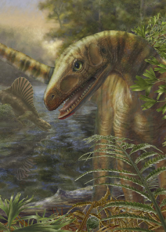 10 million years after the mass extinction, members of the archosaur reptiles – such as the 10-foot-long Asilisaurus pictured – had more restricted geographic ranges compared to the communities of four-legged animals that existed before the extinction (Marlene Donnelly / Field Museum of Natural History)