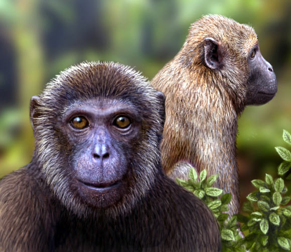 Artists impression of the newly discovered Rukwapithecus, front, and Nsungwepithecus, right (Mauricio Anton)