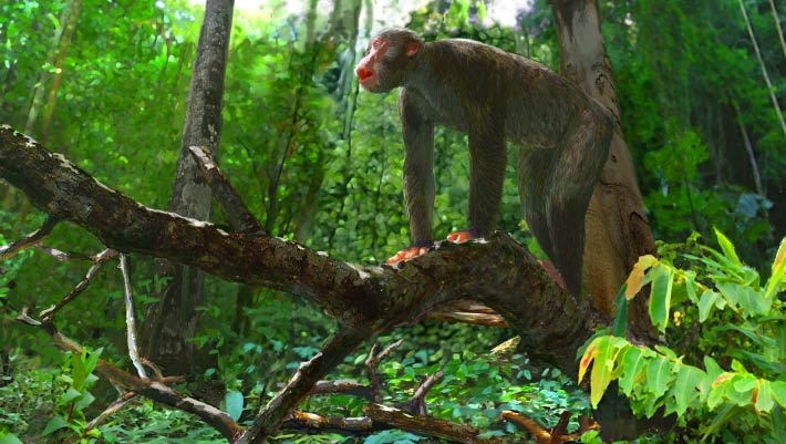 Proconsul Dendropithecus New Research Sheds Light On