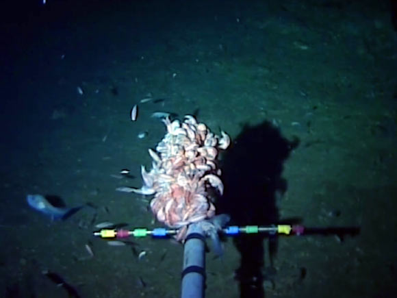 Marine Biologists Capture Footage Of Worlds Deepest