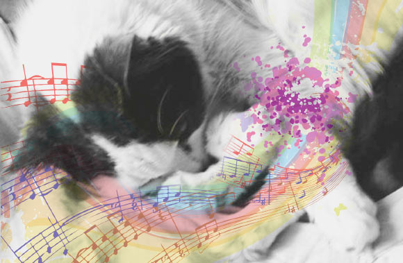 Cat-Specific Music Can Lower Stress-Related Behaviors in Cats Visiting Veterinary Clinic: Study | Biology -News.com thumbnail