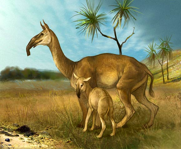 N Ungulate Prehistoric Sou...