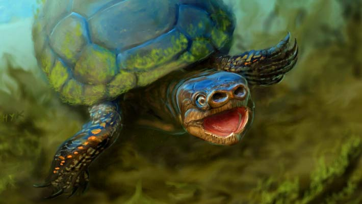 arvinachelys goldeni fossil shows pigsnouted turtles