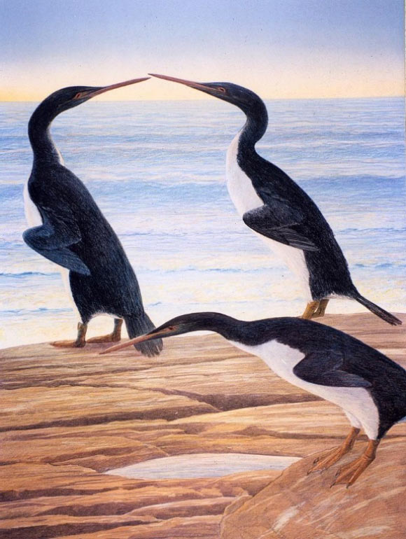 Artist's impression of a group of Waimanu penguins on a beach in Paleocene Canterbury. Image credit: Chris Gaskin, Geology Museum, University of Otago.