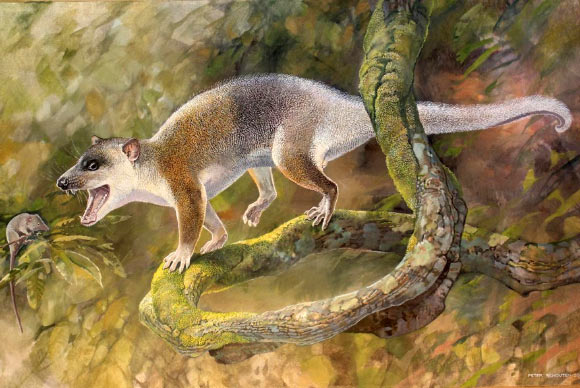 An artist's reconstruction of Anatoliadelphys maasae. Image credit: Peter Schouten