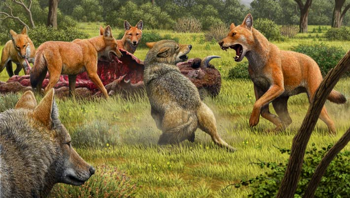 Dire Wolves Split from Living Canids 5.7 Million Years Ago: Study | Genetics, Paleontology - Sci-News.com