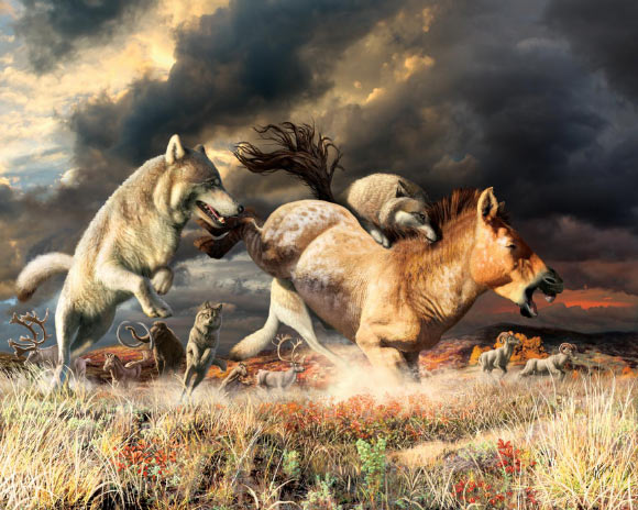 Gray wolves take down a horse on the mammoth-steppe habitat of Beringia during the Late Pleistocene, around 25,000 years ago. Image credit: Julius Csotonyi.