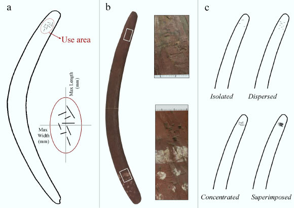 Retouch-induced marks were identified on 26% of the boomerangs examined by Martellotta et al. and were comparable to those traces observed on the surfaces of ancient European bone retouchers. Image credit: Martellotta et al., doi: 10.1016/j.jasrep.2021.102967.