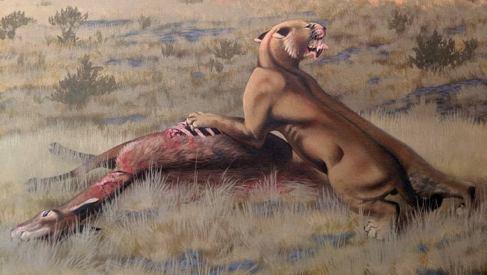 <p>Giant Saber-Toothed Cat Roamed North America Through Miocene thumbnail