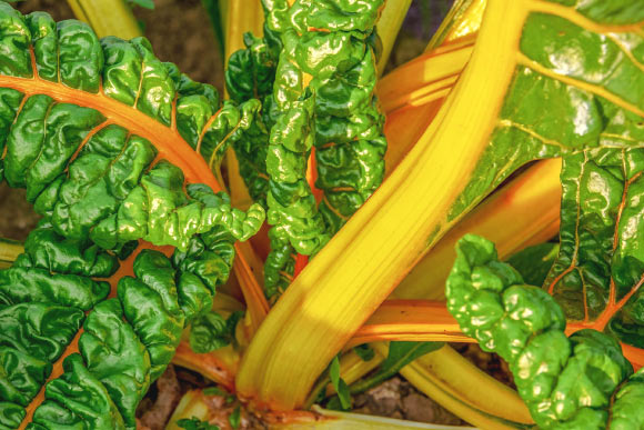 <p>Eating Green Leafy Vegetables May Reduce Cardiovascular Disease Risk thumbnail