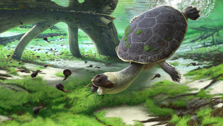 <p>Cretaceous Turtle from Madagascar Had Adaptations for Suction Feeding thumbnail