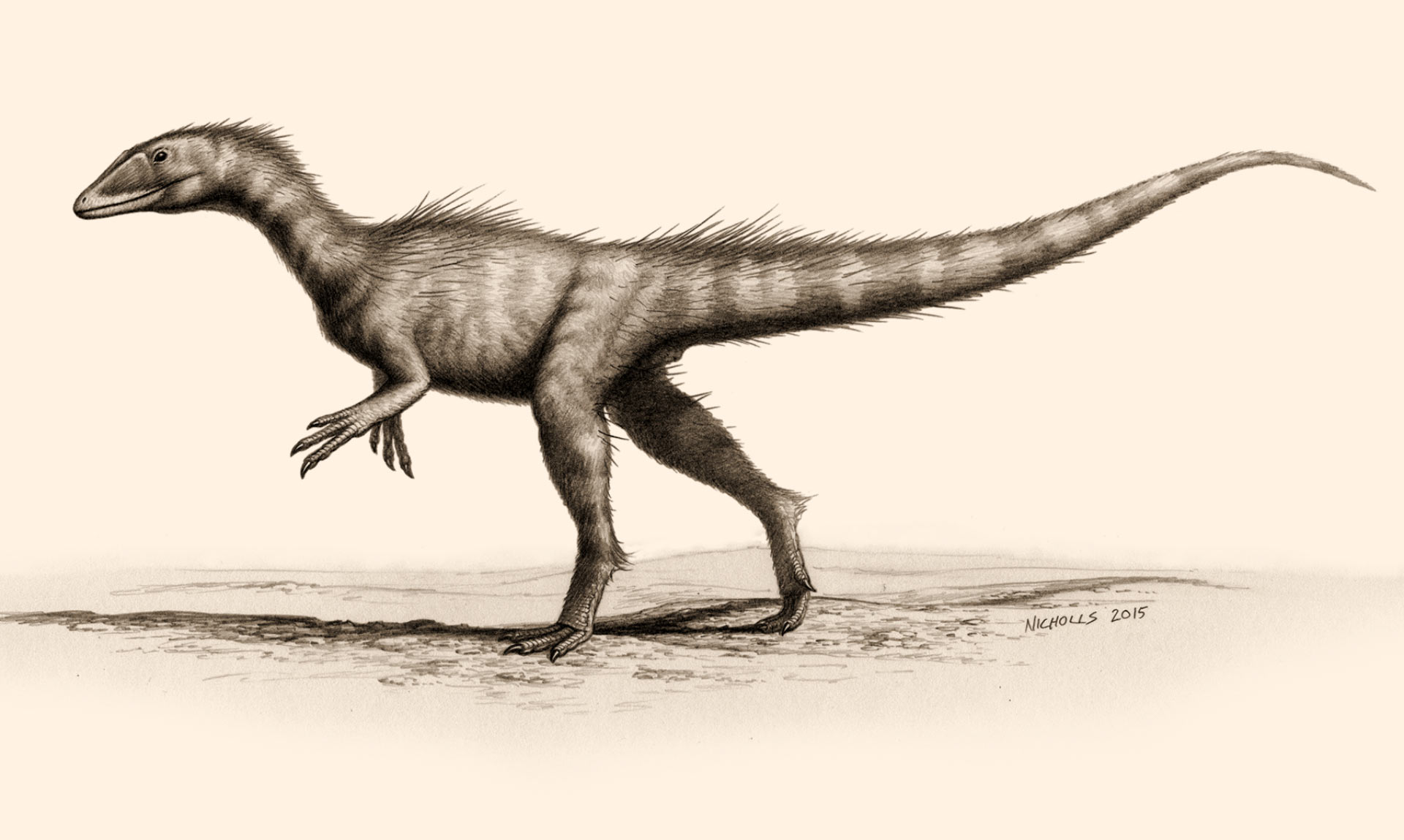 dracoraptor hanigani new species of dinosaur discovered in wales
