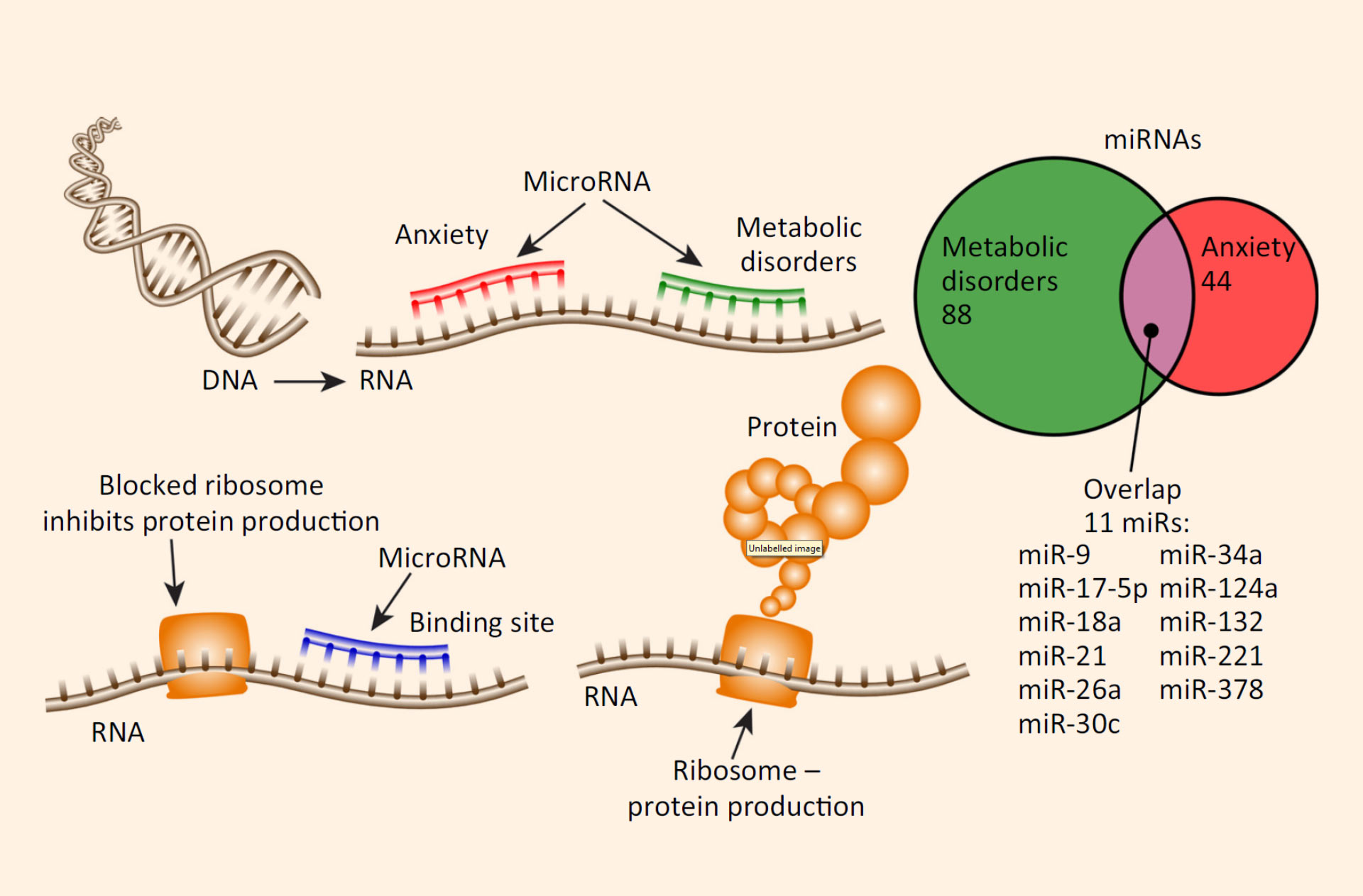 altered micrornas in anxiety and metabolic disorders  image credit: chanan  meydan et al,