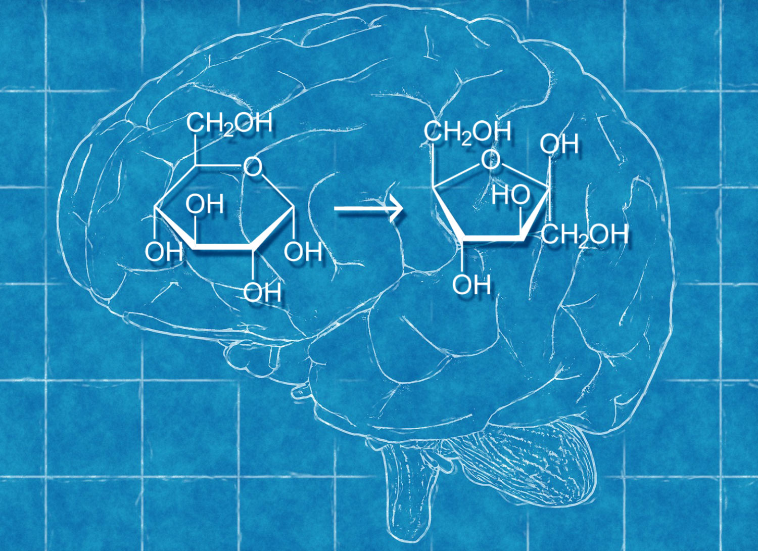 The human brain can produce fructose, new experiment suggests