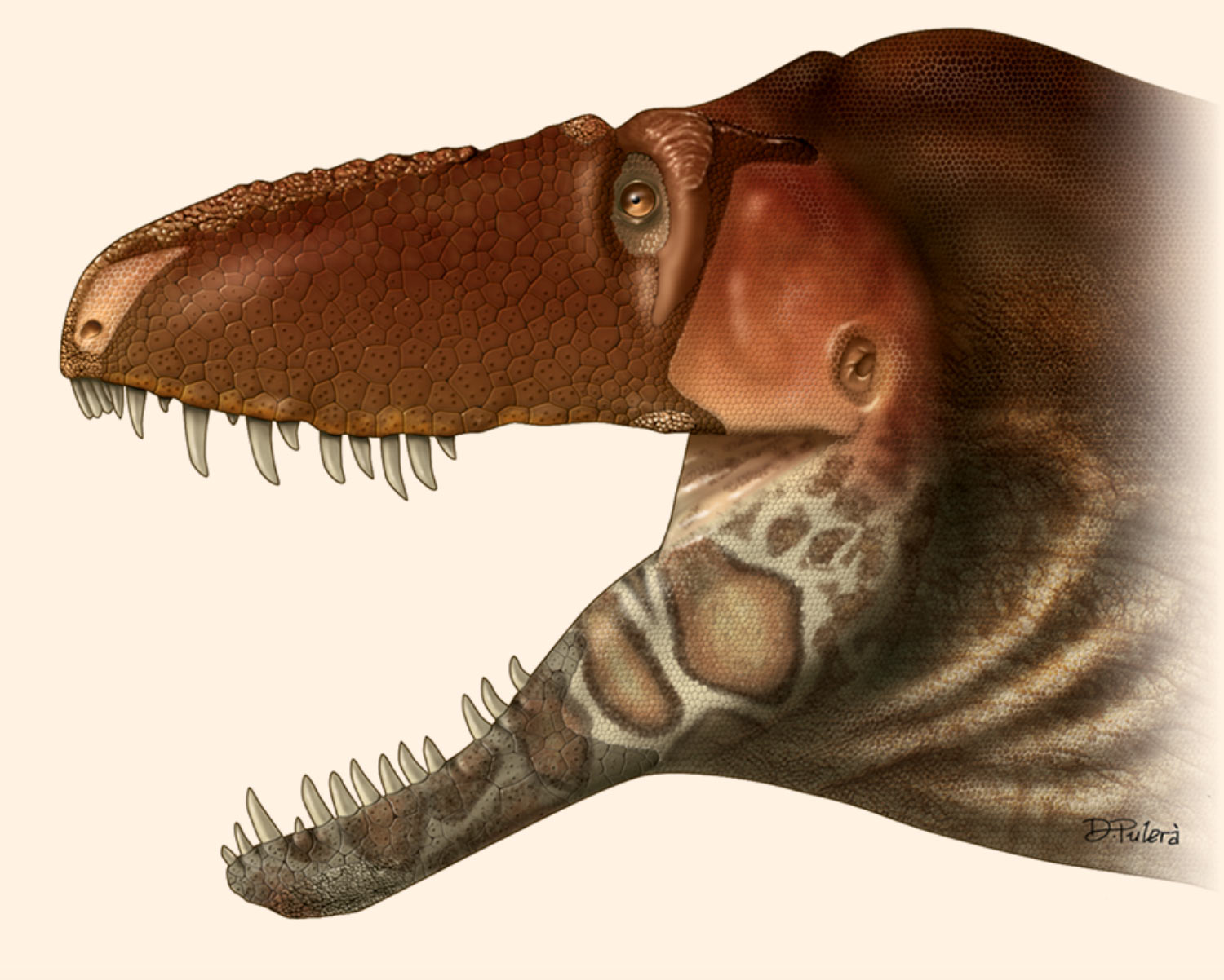 Image result for daspletosaurus horneri