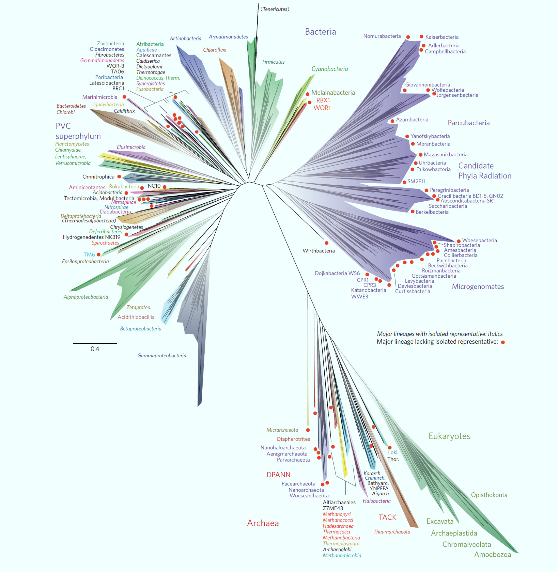 symphy researchers propose new tree of life framework that
