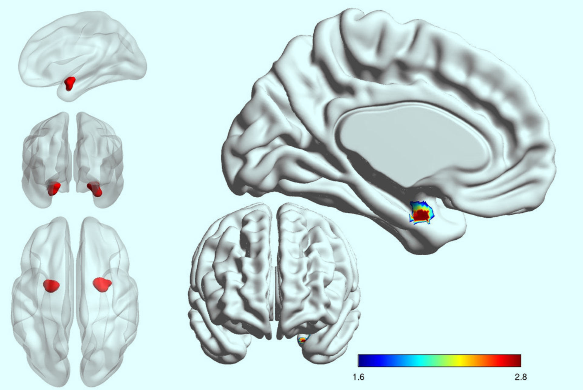 Amygdala Neurons Could Hold Key to Accurately Diagnosing Unipolar ...