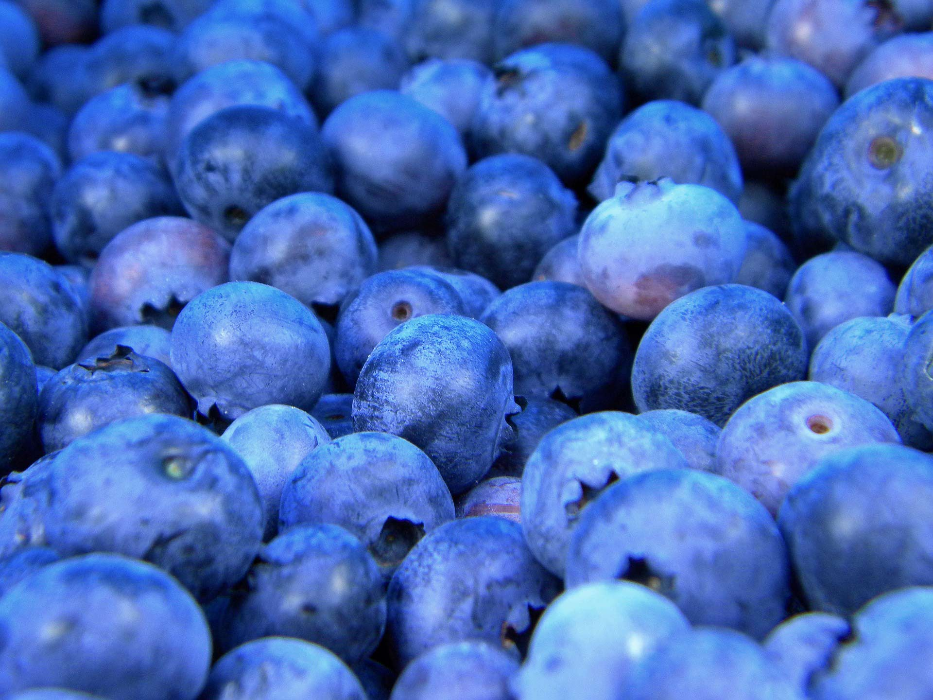 Blueberry Anthocyanins May Reduce Blood Pressure ...