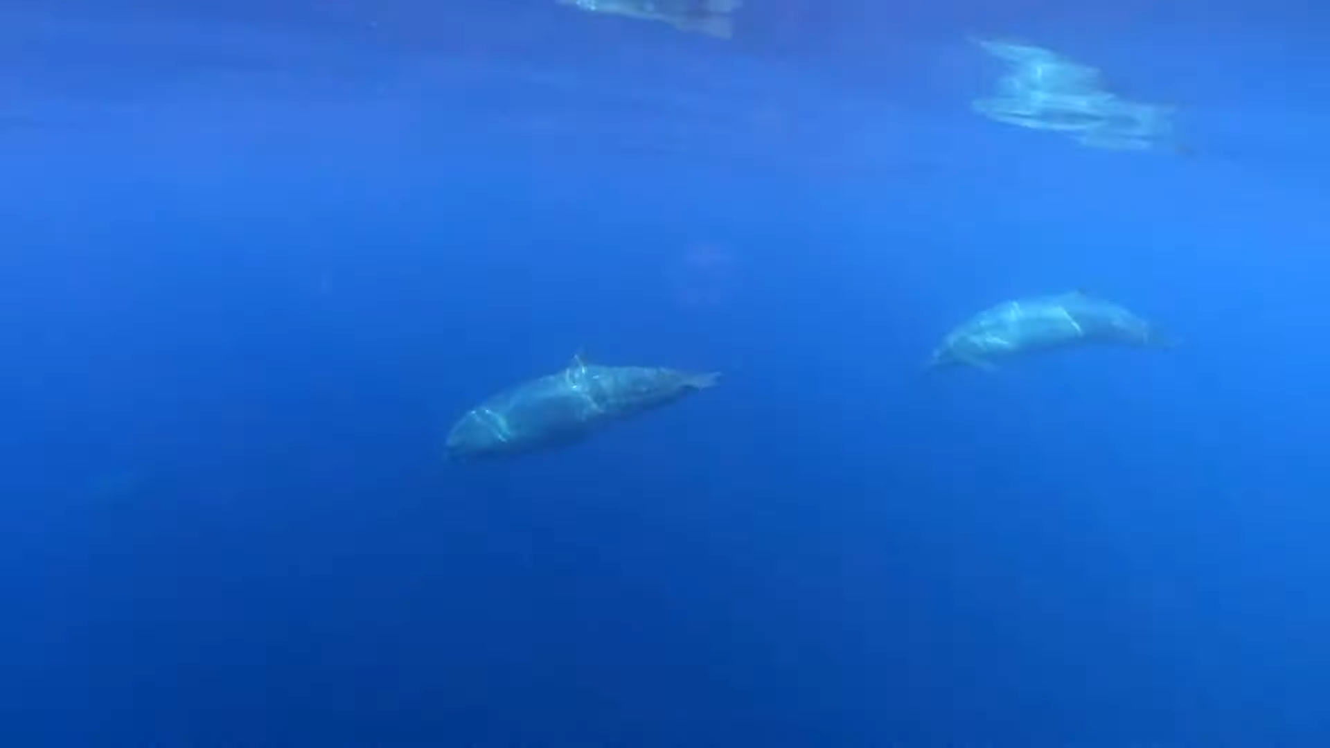 Was New Beaked Whale Species Discovered off Mexico's Western Coast?